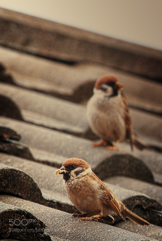 Photograph Posing birds by Tadej Pekolj on 500px
