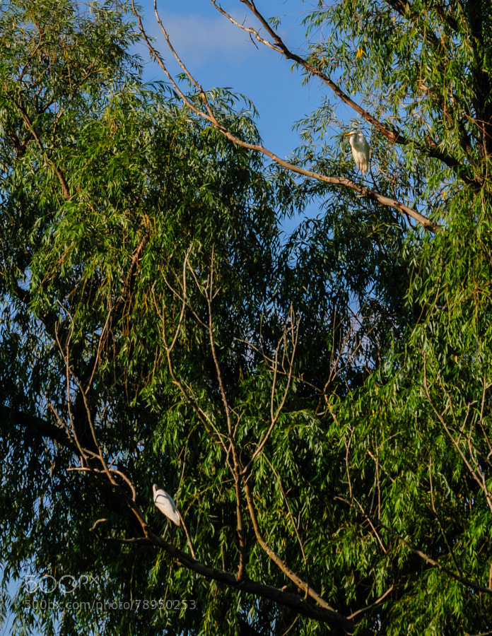 The one was in the tree and the other flew from the water to the tree, sat a moment and then took off.