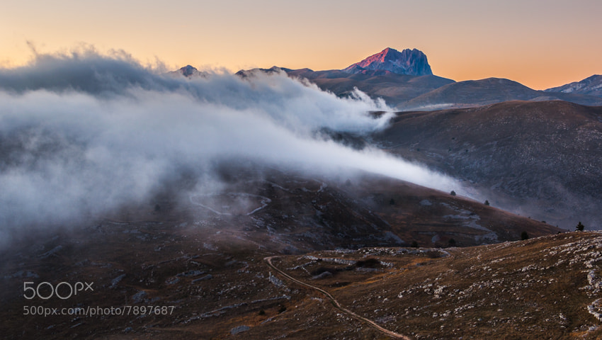 Photograph Red King by Alessio Andreani on 500px