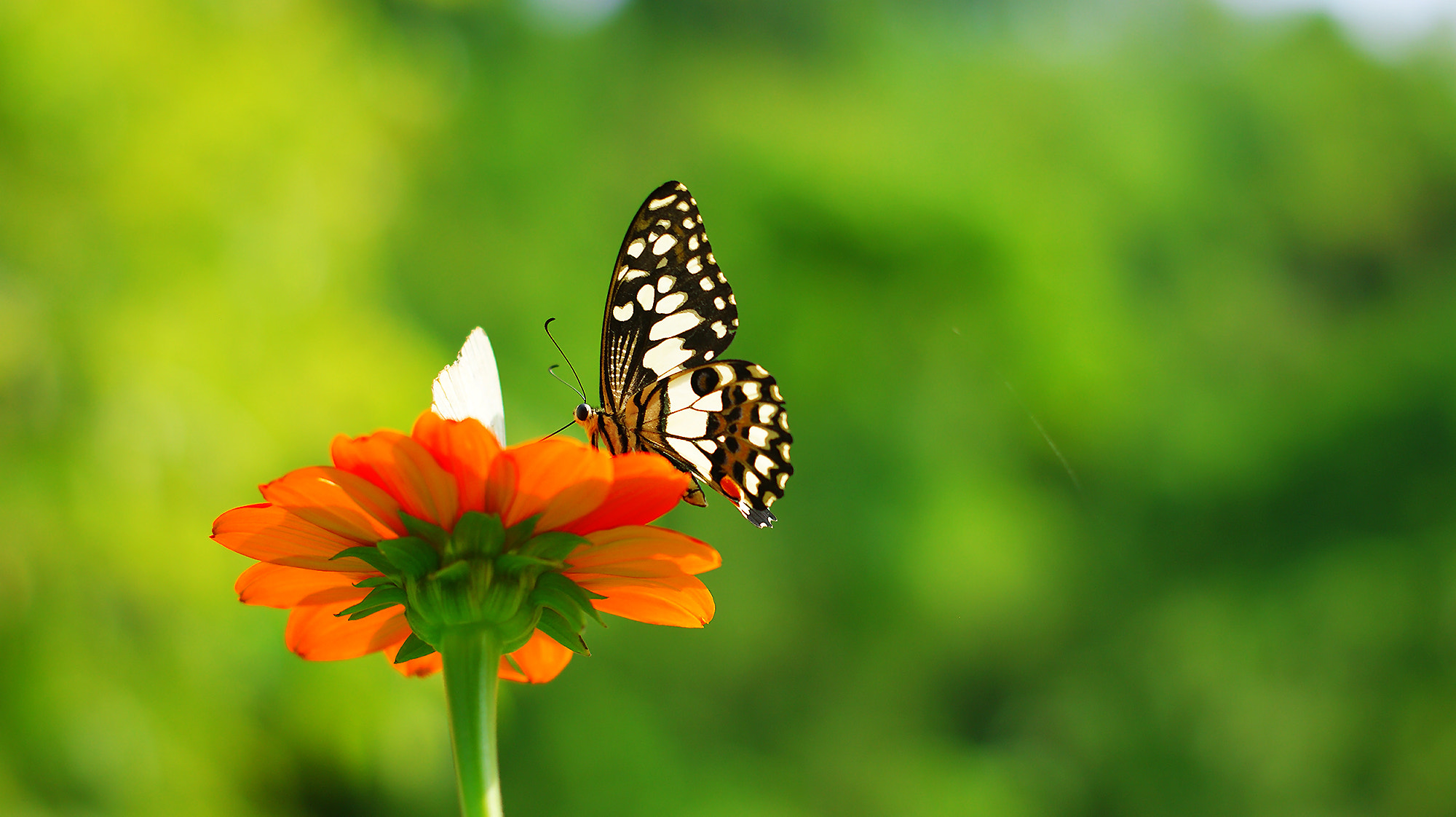 Photograph Bg green and buterfly by lionpink on 500px