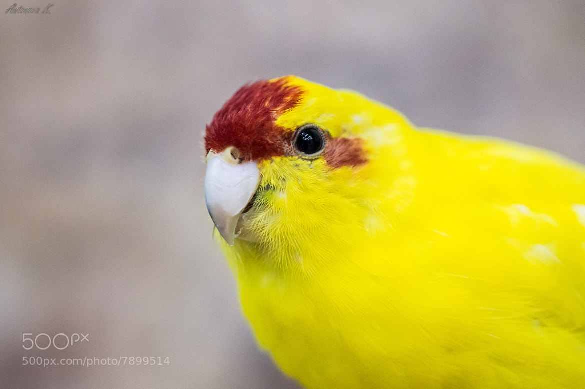Photograph yellow friend by damnlynx  on 500px