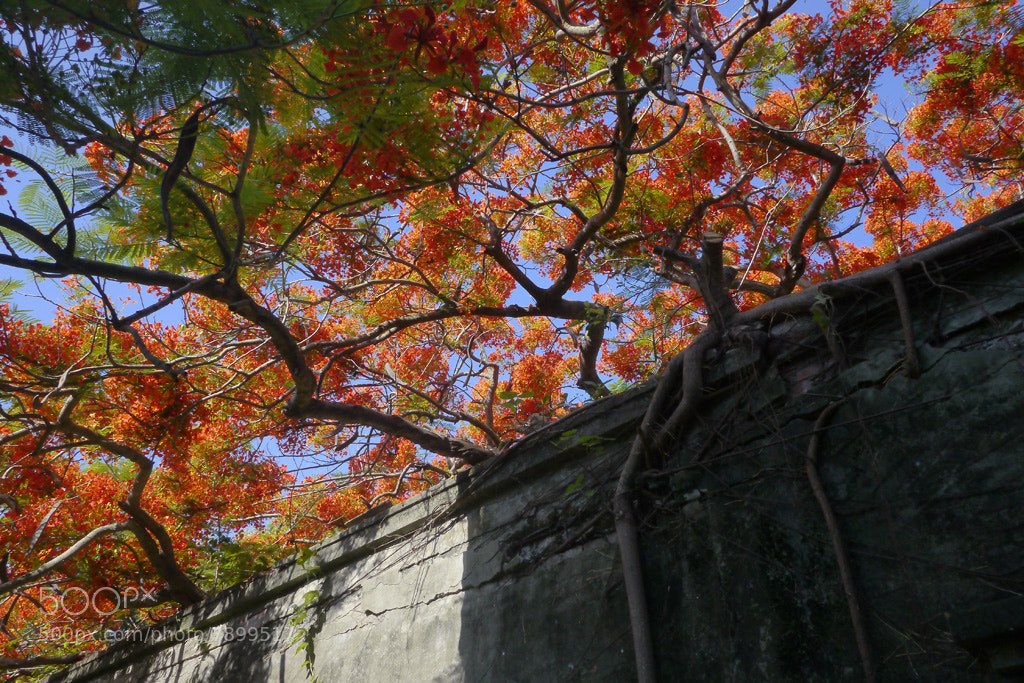 Photograph Old walls and Phoenix to spend by lily su on 500px