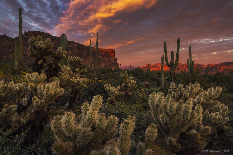 Photograph Prickly Pink Peralta by Peter James Nature Photography  on 500px