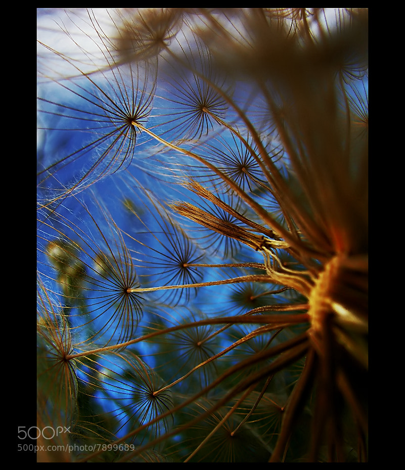 Photograph Inside the Dandelion  by EMERALD WAKE © on 500px