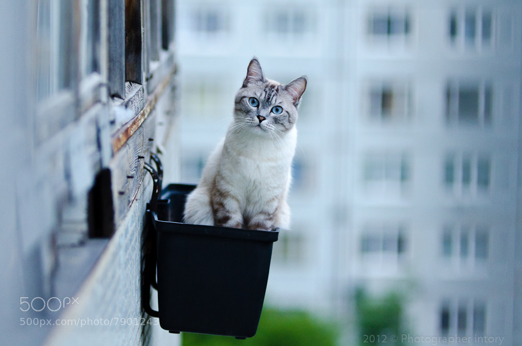 Photograph Cat Flower by Dmitriy Fedotov on 500px