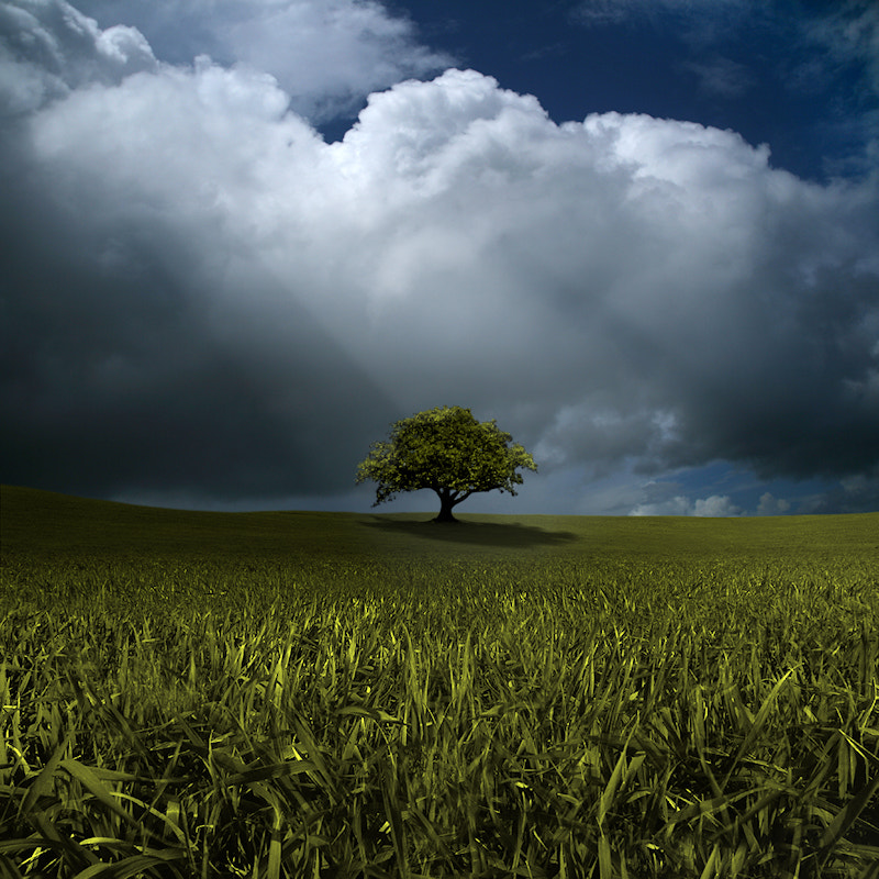 Photograph Alone Before Adversity by Carlos Gotay on 500px