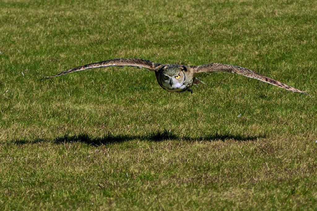 Photograph Looking for prey! by Bo Kristensen on 500px