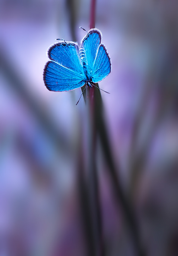 Photograph blue by Beni Arisandi on 500px