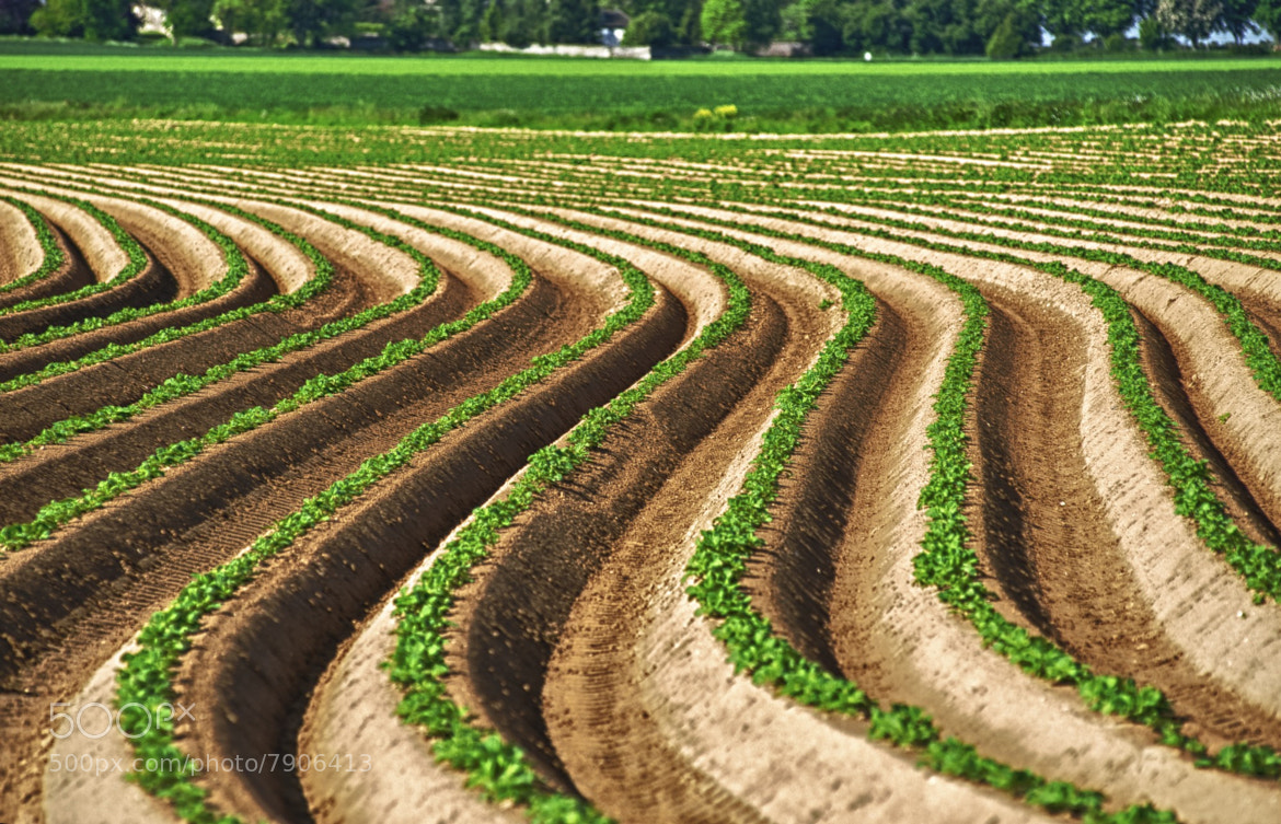 Photograph Agricultural Waves by Hubert Descamps on 500px