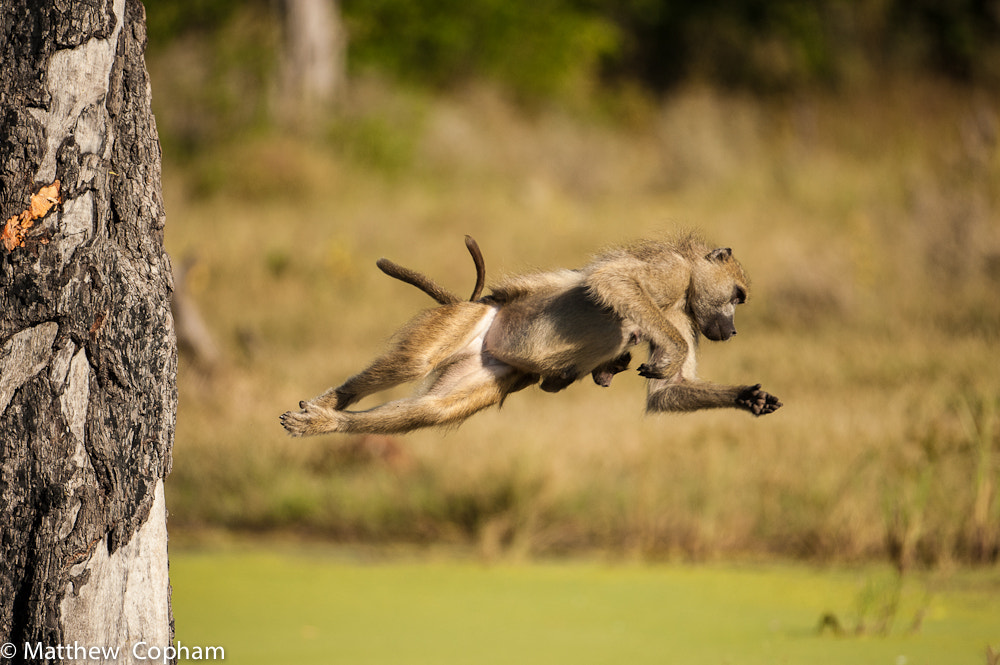 Photograph BUNGEE!! by Matthew  Copham on 500px