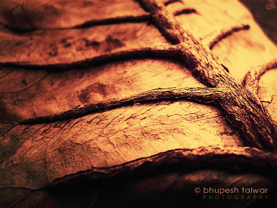 Photograph Ages by Bhupesh Talwar on 500px