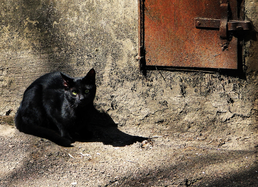 Photograph black cat by Arisa Dina on 500px