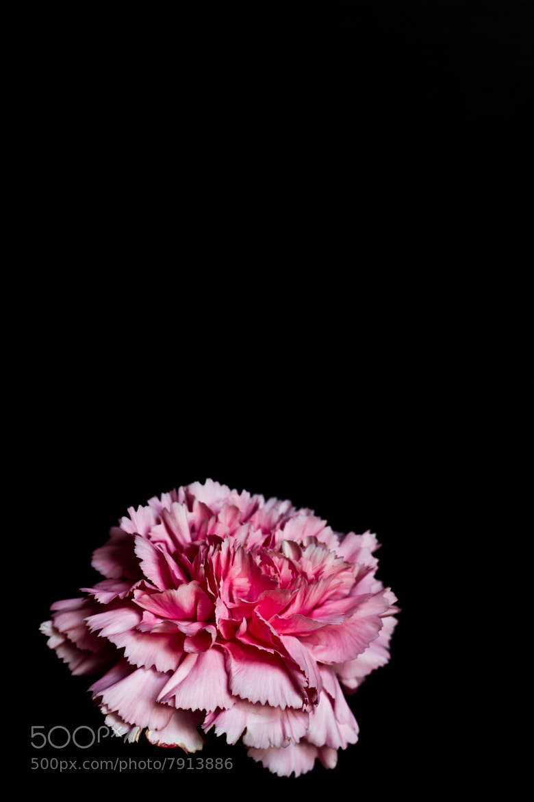 Photograph Flower by Evan Thomas on 500px