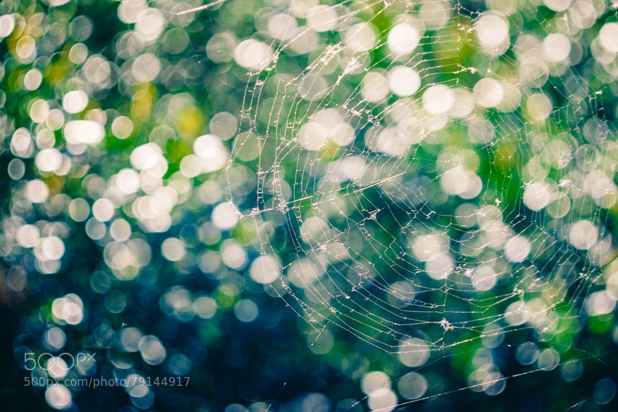 Photograph web by Natasha Berg on 500px