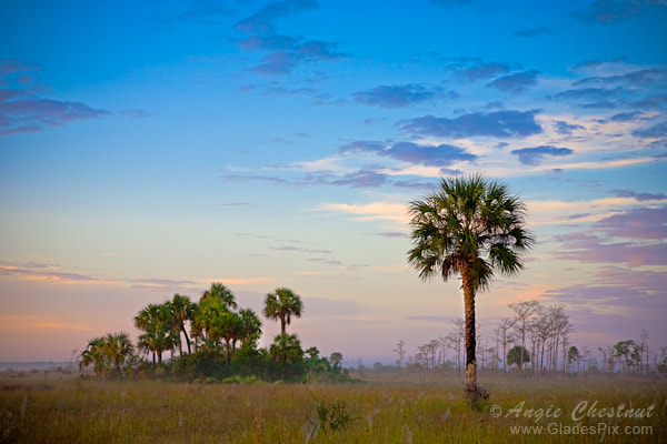 Photograph Tamiami Morning by Angie Chestnut on 500px