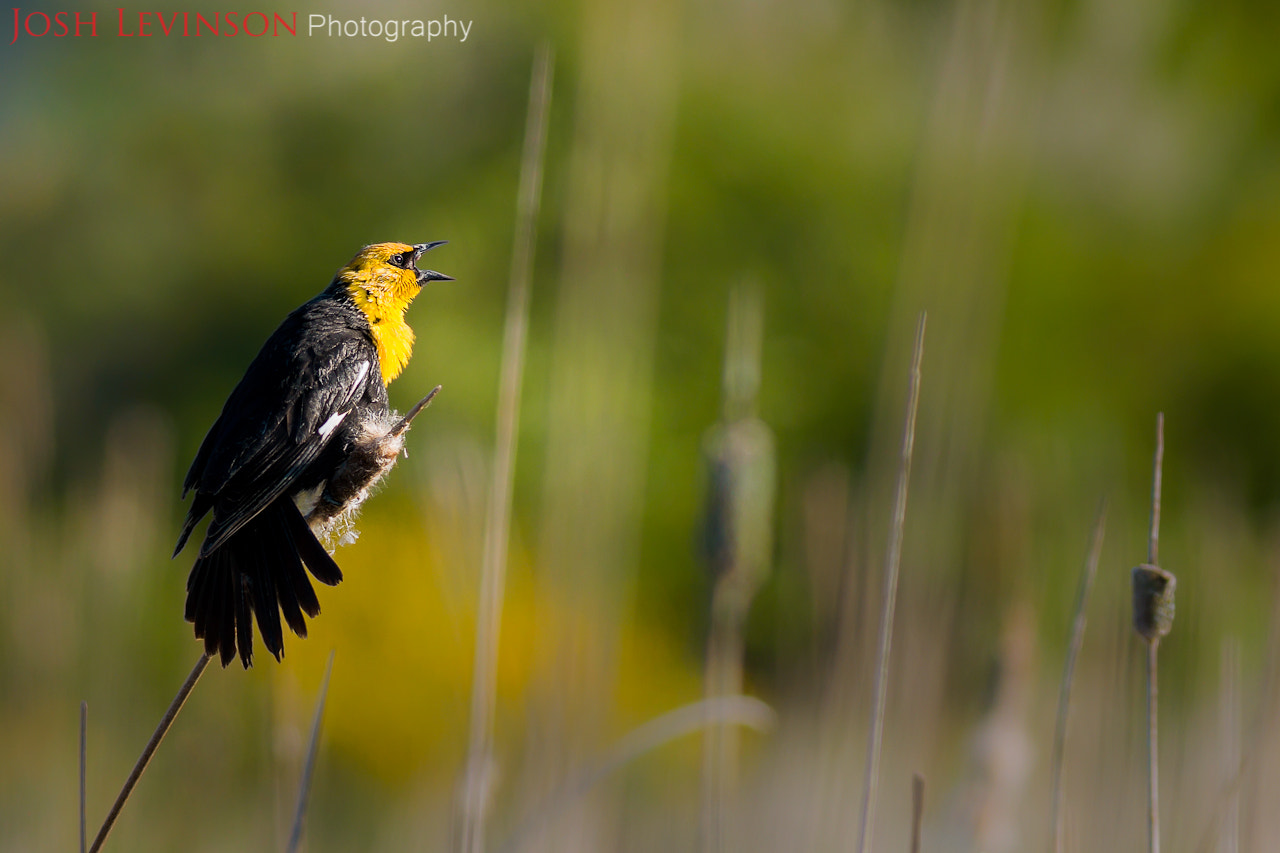 Photograph The yellow head by Josh Levinson on 500px