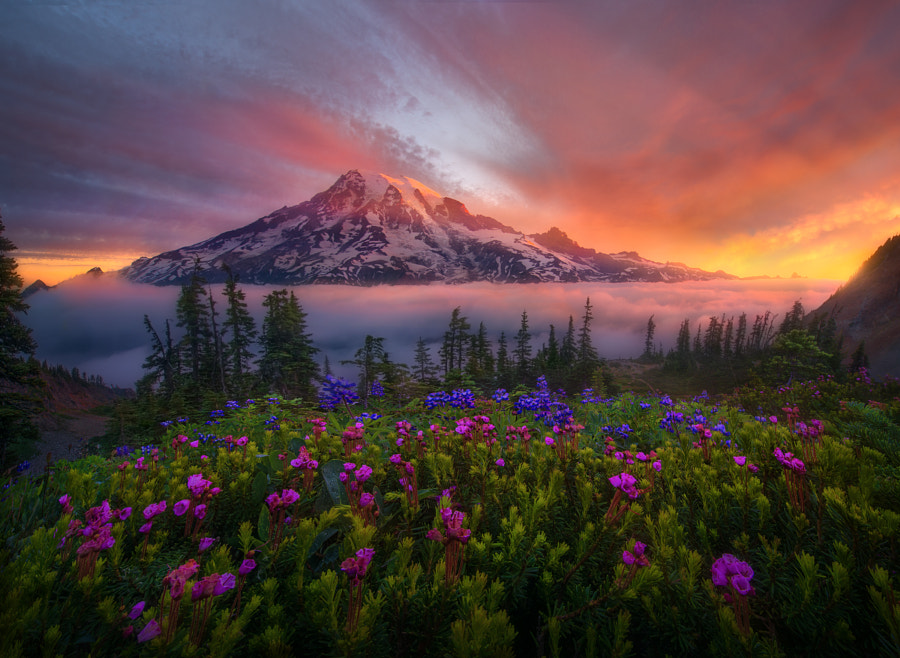 Photograph Tahoma the Great by Marc  Adamus on 500px