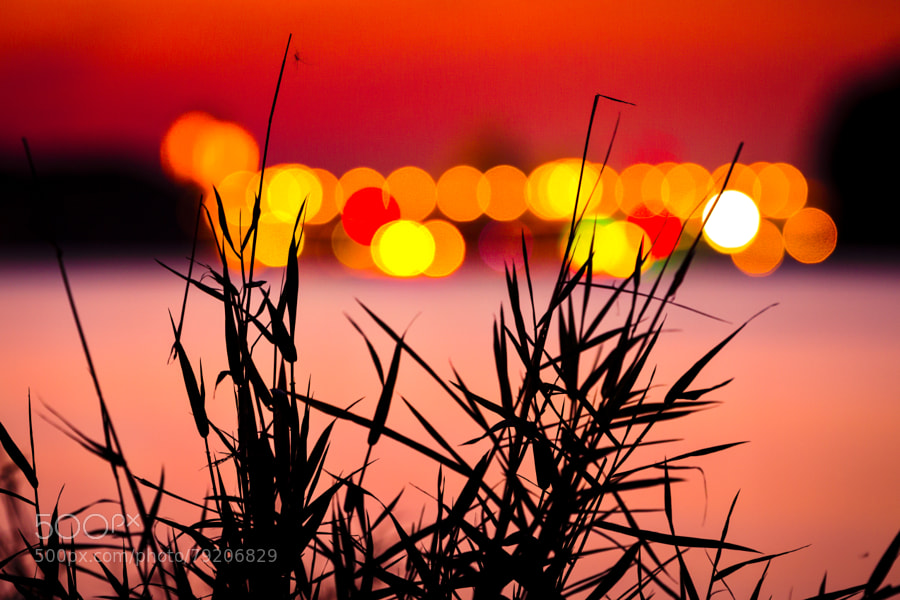 Photograph Grass and Lights by Marc Braner on 500px