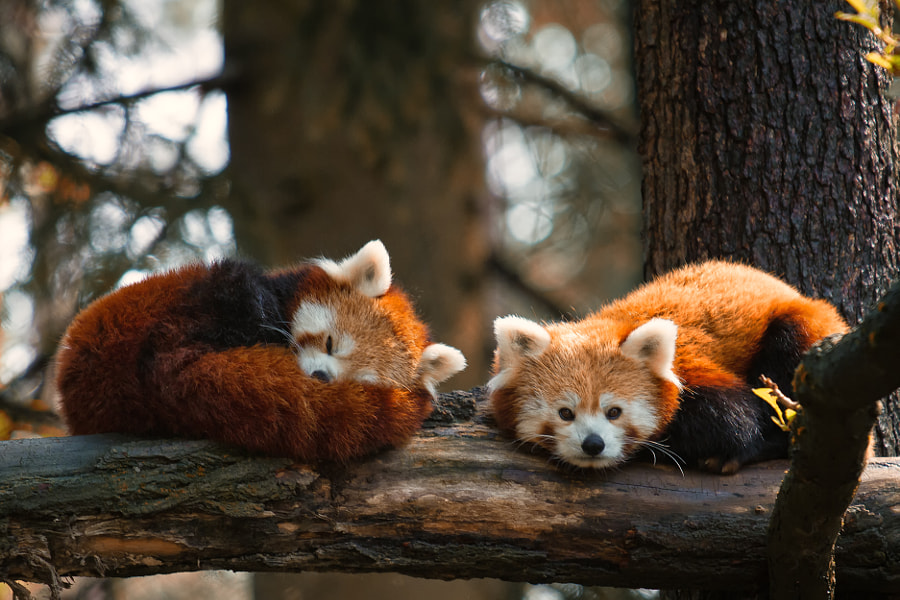 Photograph Nap Time by Troels Kinthof on 500px