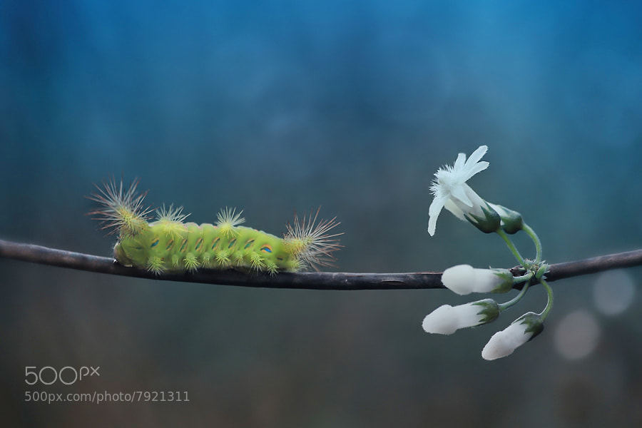 Photograph Flower and Thorn by Arief Perdana on 500px