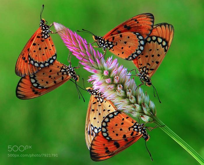 Photograph Three couples by Anif Putramijaya on 500px