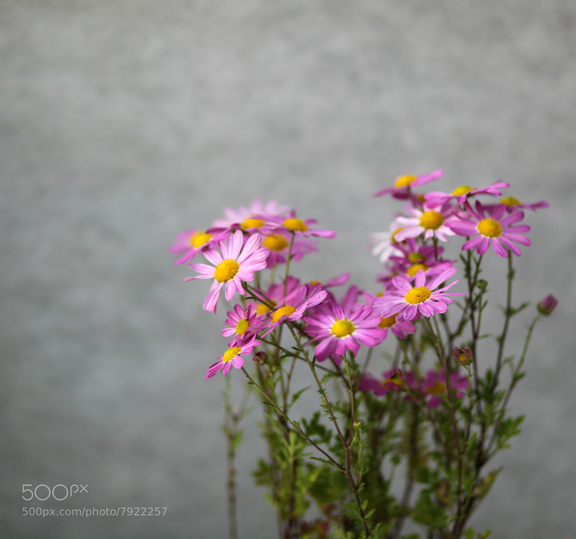 Photograph Untitled by Sun Vonxu on 500px