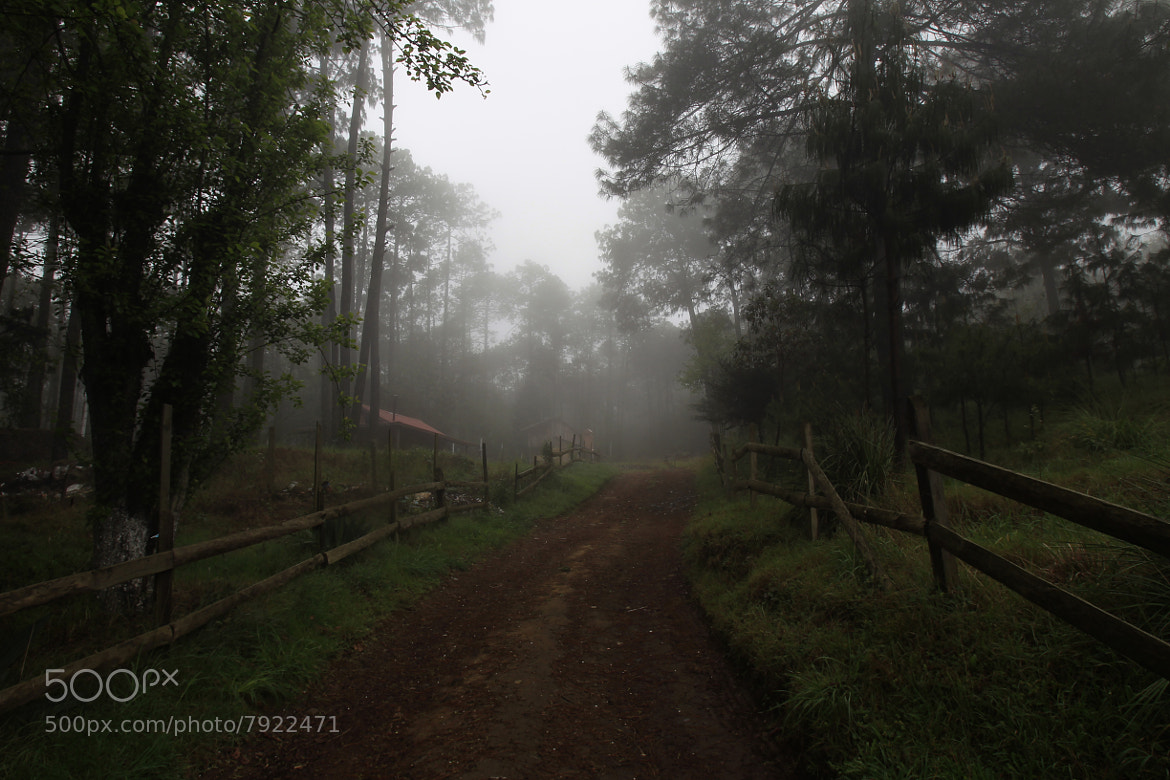 Photograph Fog and pine forest by Cristobal Garciaferro Rubio on 500px