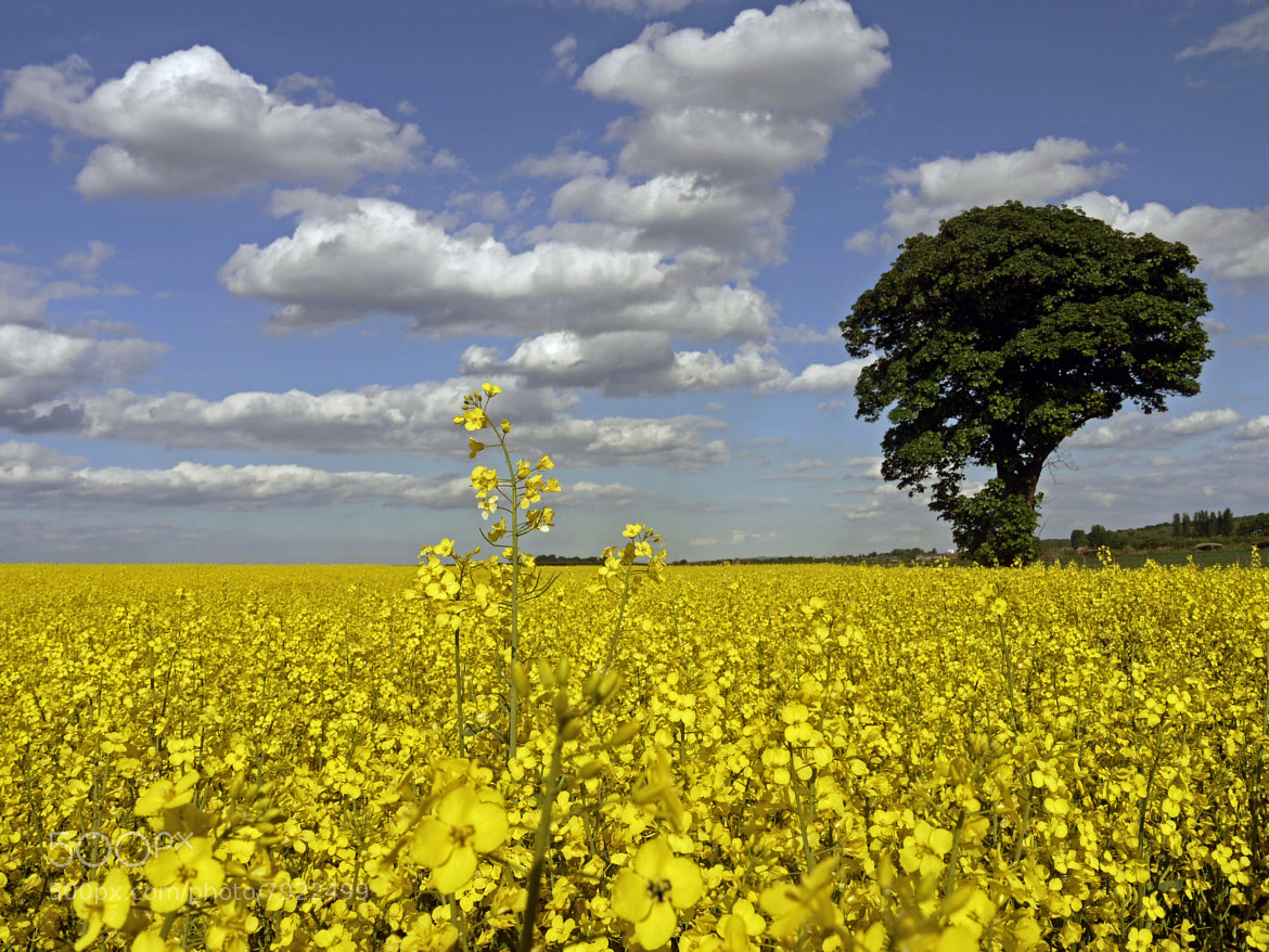 Photograph RAPESEED by KENNY BARKER on 500px