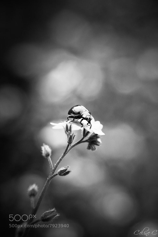 Photograph Sous les Flashs by Céline Cahanin on 500px