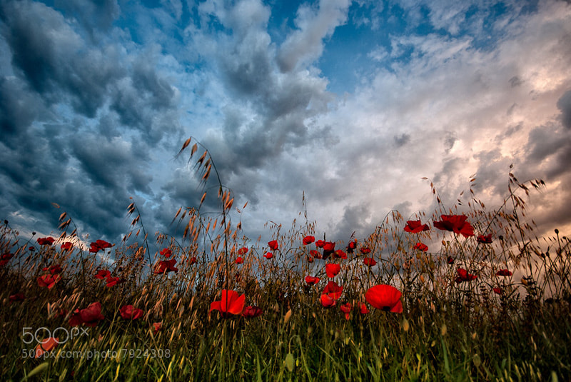 Photograph RGB by Graziano Racchelli on 500px