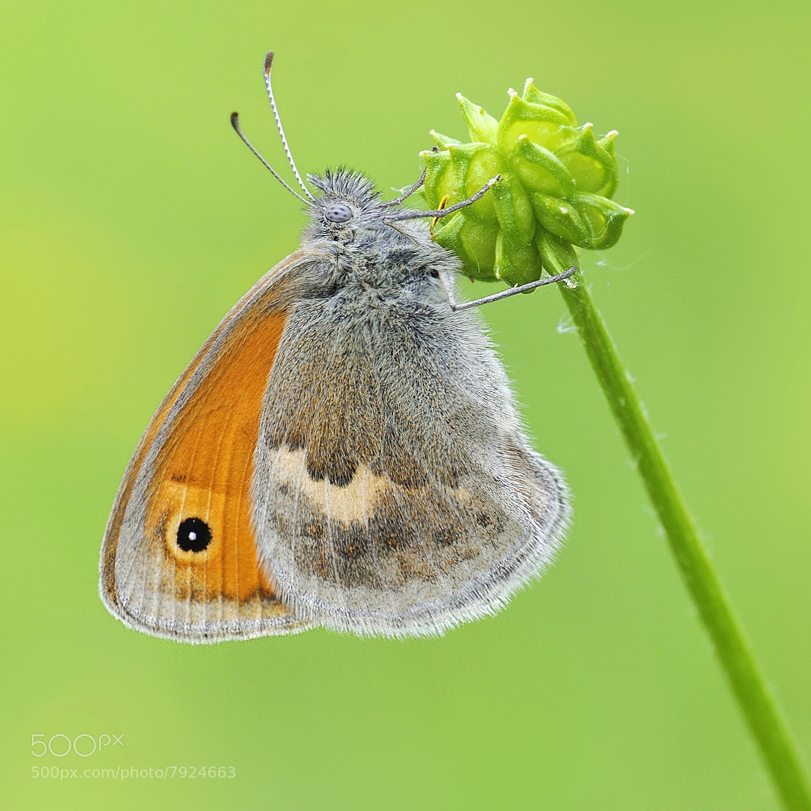 Photograph little butterfly by mauro maione on 500px