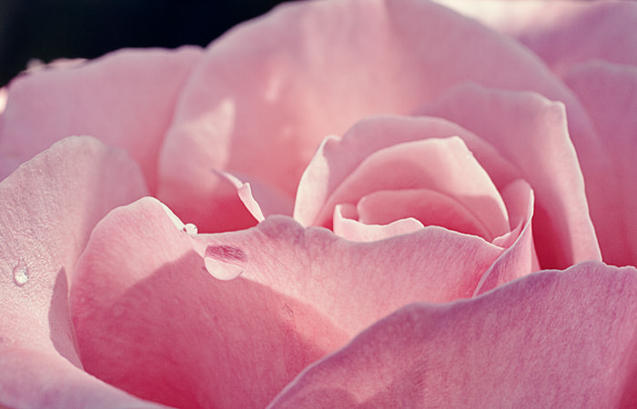 Photograph Pink by Julia K on 500px