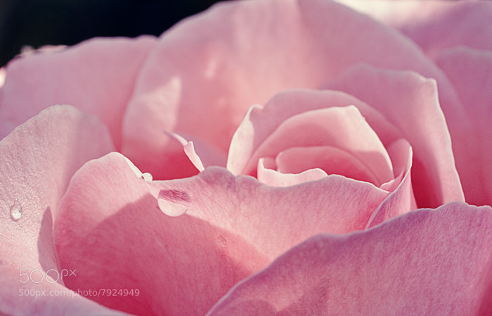 Photograph Pink by Julia S on 500px