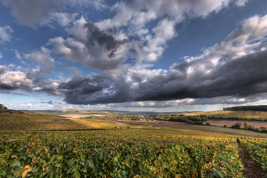Photograph Vineyards of Chablis by Sebastien Papon on 500px