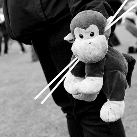 Prize monkey