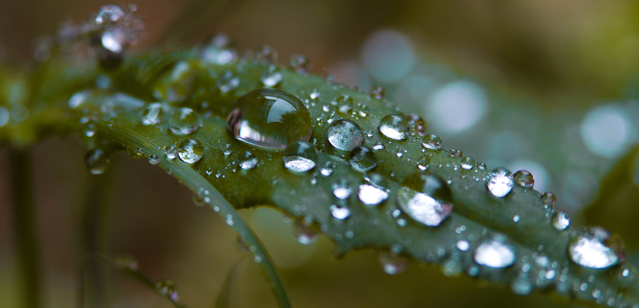 Photograph After the rain. by Paul Shaw on 500px