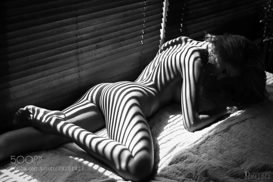 Photograph Zebra by Дмитрий Бугаенко on 500px