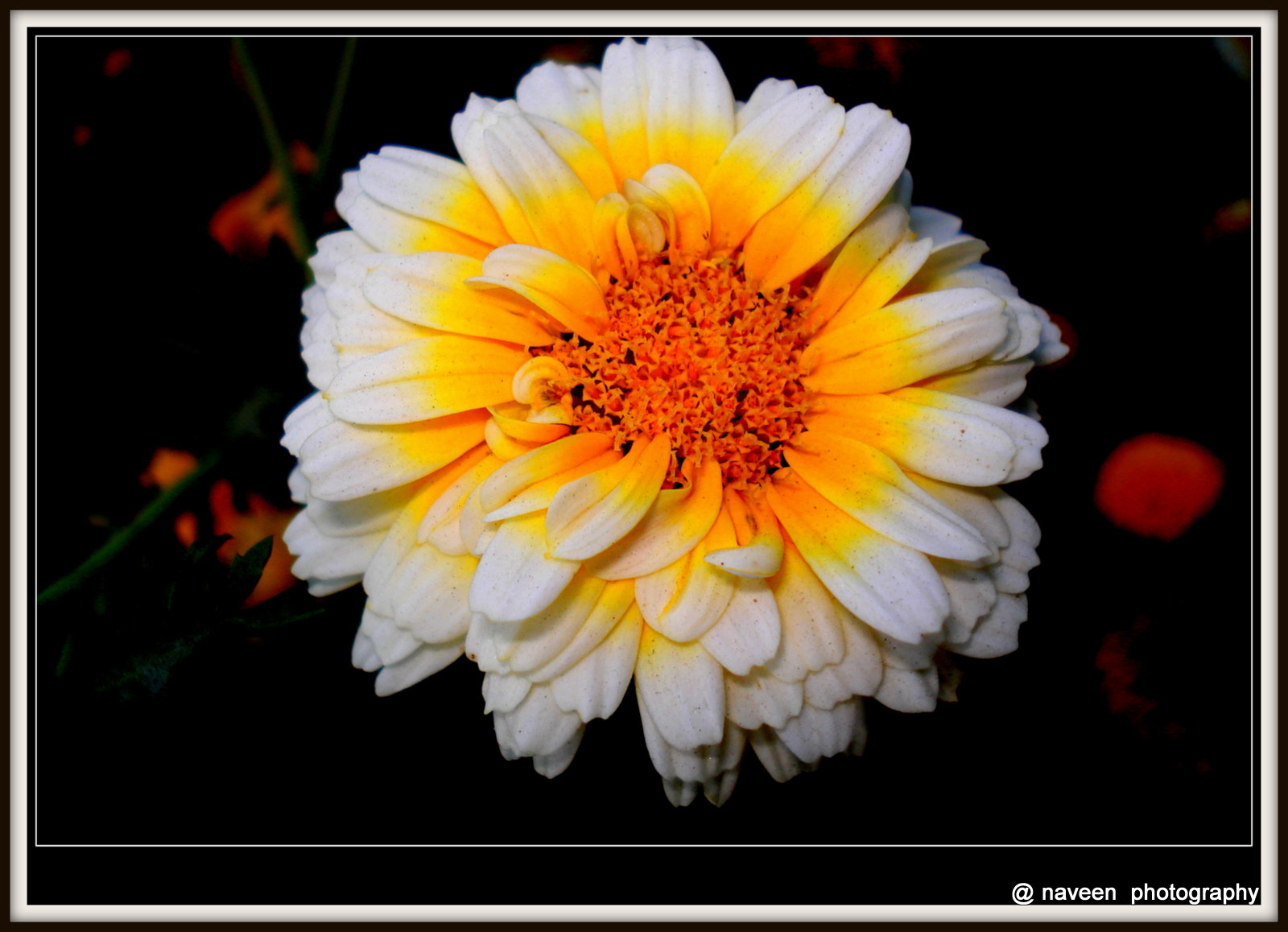 Photograph Friendship flower by naveen sharma on 500px