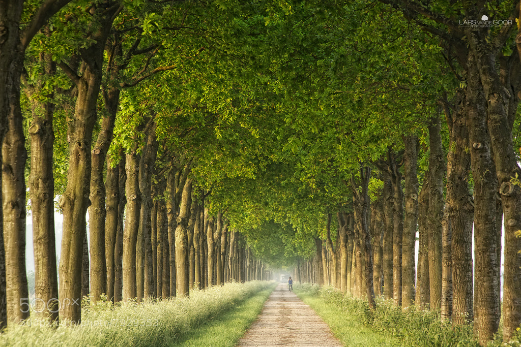 Photograph endless green by Lars van de Goor on 500px