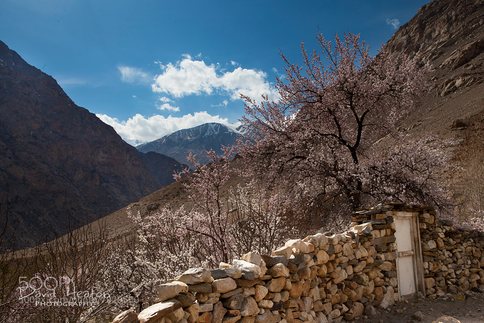 Photograph Blossom in Ka by David Heaton on 500px