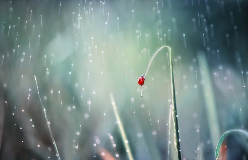 Photograph singing in the rain * by BLOAS Meven on 500px