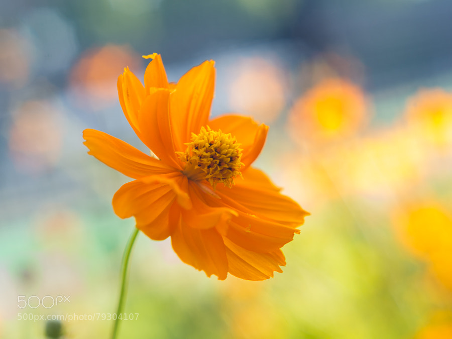Photograph new sunny day by Miyako Koumura on 500px