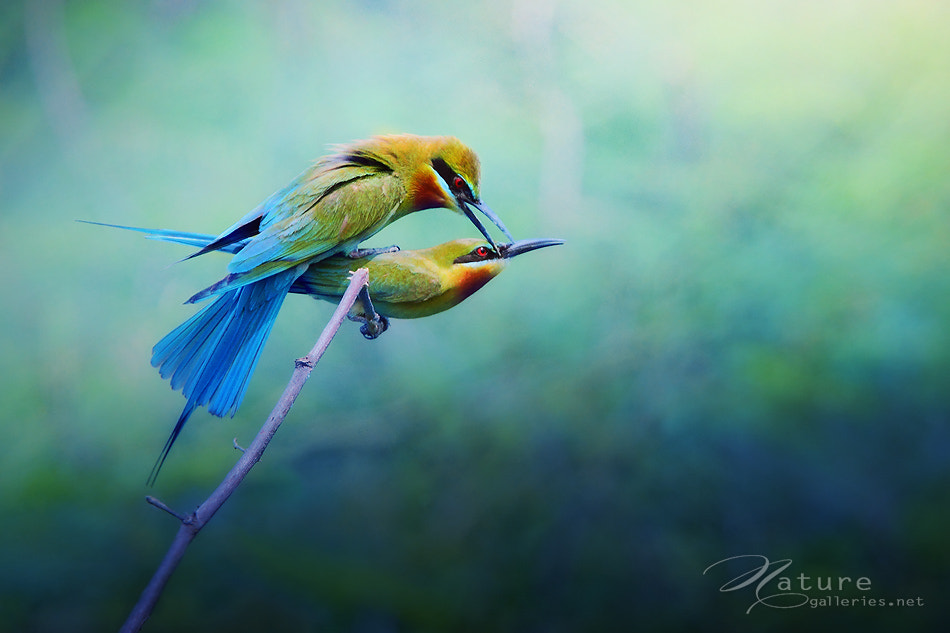 Photograph In love by Sasi - smit on 500px