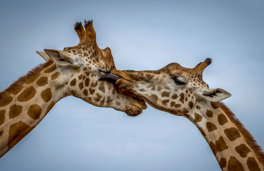 Tender Love by Pepe Rojas on 500px.com