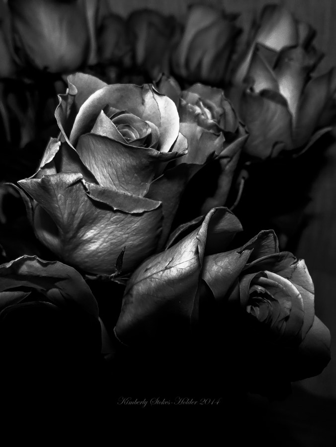 Shadowy Rose