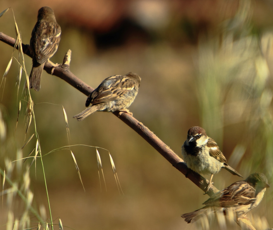 Photograph bird's meeting by yazid mohamed BITAM on 500px