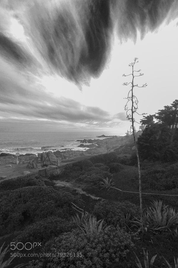 """Casa de Isla Negra was one of Pablo Neruda's three houses in Chile. It is located at Isla Negra, a coastal area of El Quisco commune, located about 45 km south of Valparaíso and 96 km west of Santiago. It was his favorite house and where he and his third wife, Matilde Urrutia, spent the majority of their time in Chile. Neruda, a lover of the sea and all things maritime, built the home to resemble a ship with low ceilings, creaking wood floors, and narrow passageways. A passionate collector, every room has a different collection of bottles, ship figureheads, maps, ships in bottles, and an impressive array of shells, which are located in their own """"Under the Sea"""" room.  Neruda and Urrutia are both buried there, with a clear view of their beach. In English, Isla Negra means """"Black Island,"""" which refers to a rock outcropping nearby, however Isla Negra is not, in fact, an island.  During the winter, the area is subject to heavy rains, which inspired Neruda to write his Oda a la Tormenta (""""Ode to the Storm""""). Isla Negra was also Neruda's inspiration for many other poems.  The house is now a museum, managed by the Pablo Neruda Foundation, and has become a popular tourist destination."""