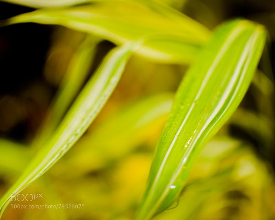 Photograph Leaves by Ali Fardan