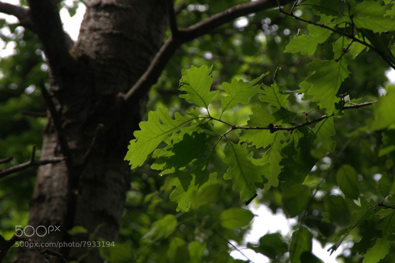 Photograph Summer Oaks by Jutta Karin Schultz on 500px