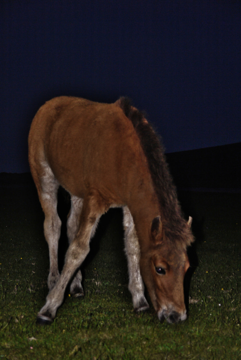 Photograph Foal at Dusk by Rosie Schneider on 500px